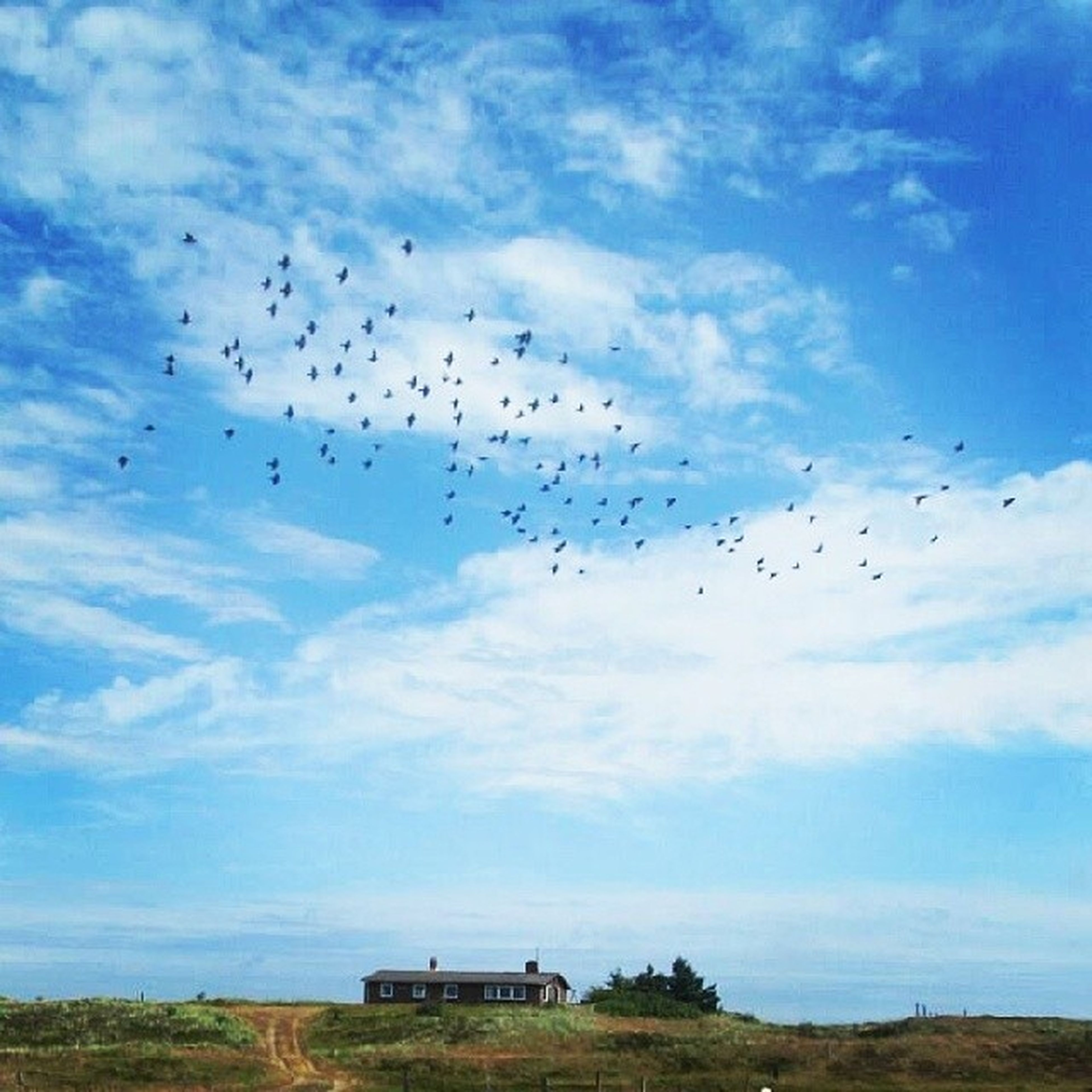 flying, bird, animal themes, animals in the wild, flock of birds, sky, wildlife, mid-air, cloud - sky, medium group of animals, low angle view, nature, blue, landscape, cloud, spread wings, beauty in nature, day