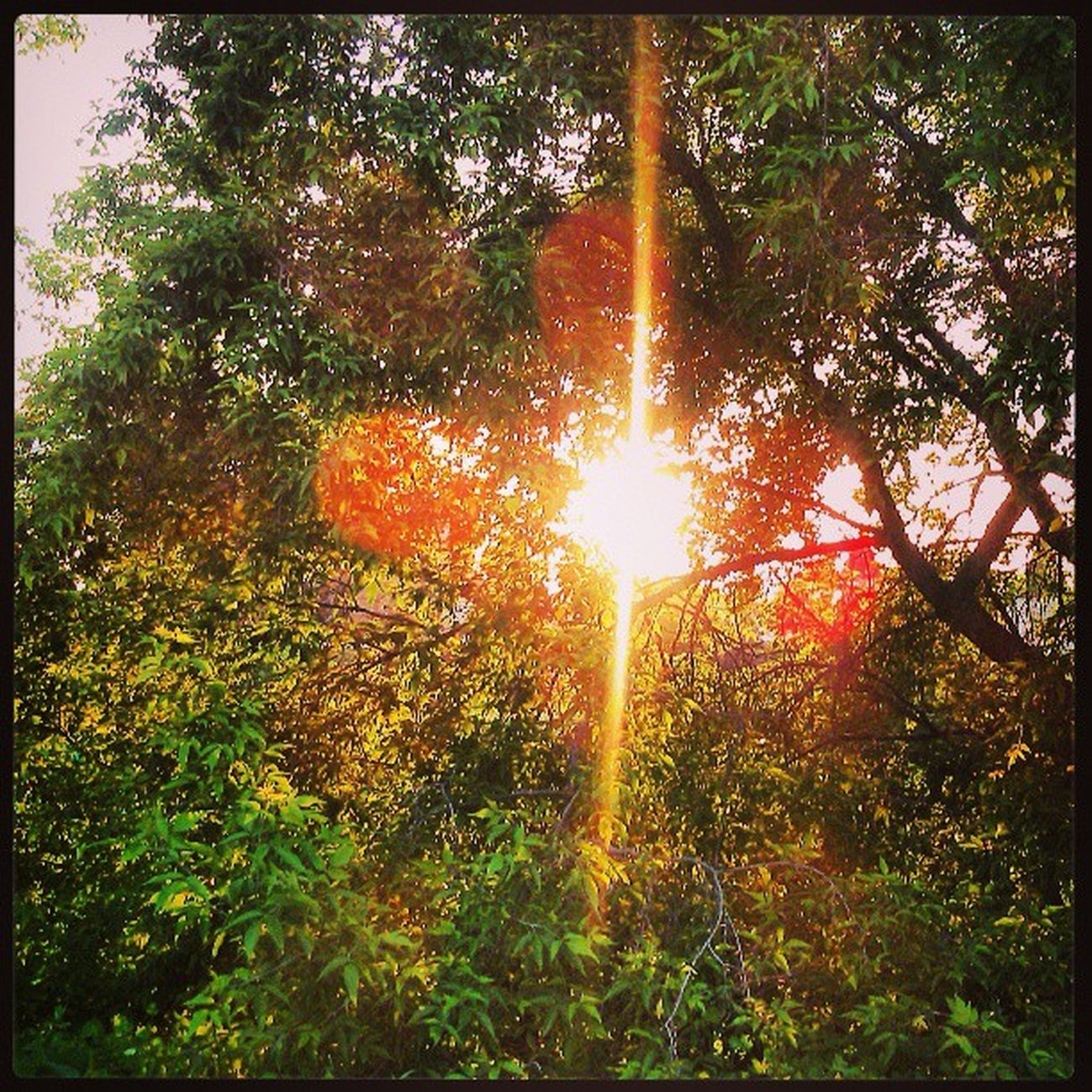 лепота Природа солнце