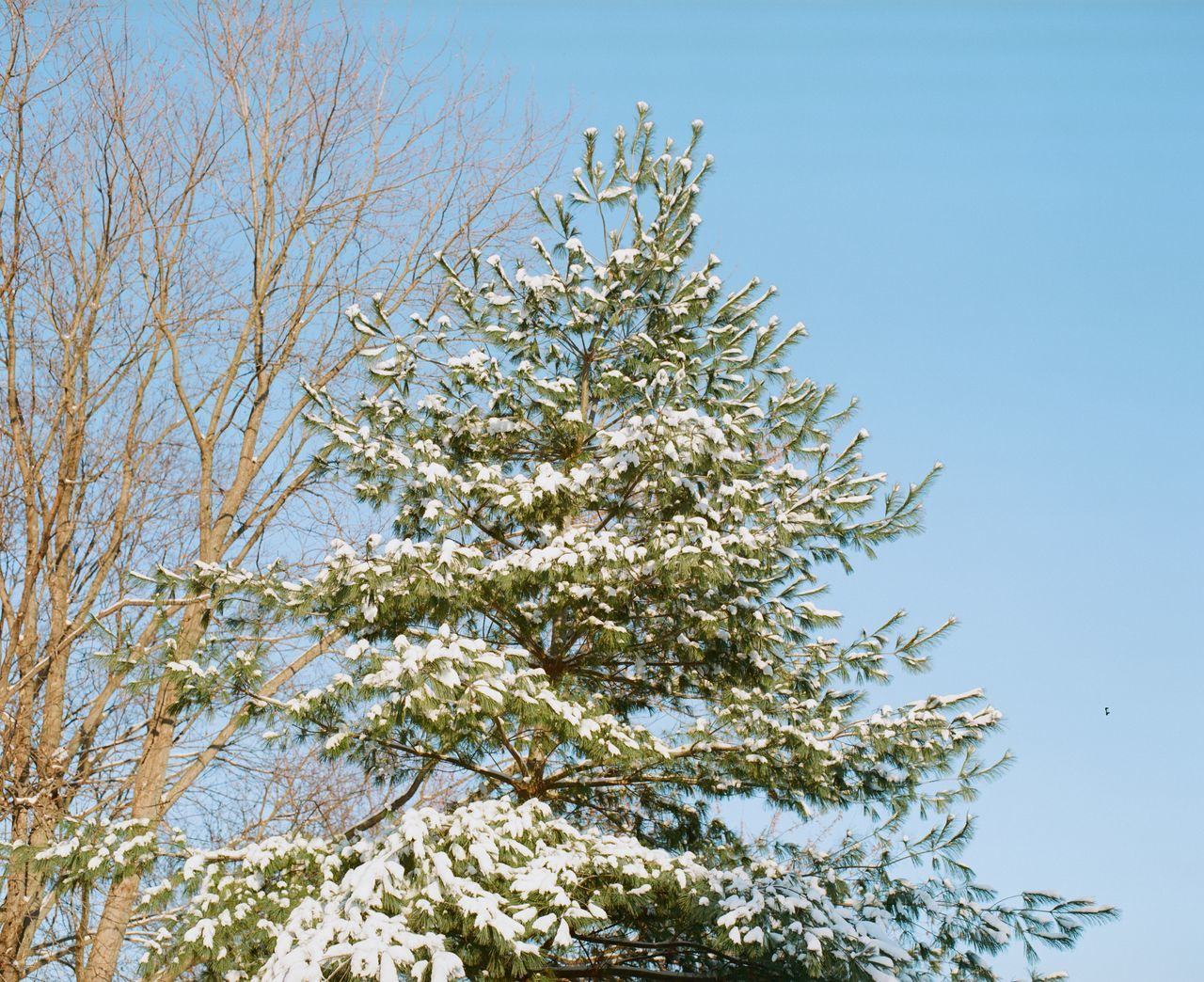 tree, low angle view, branch, clear sky, nature, growth, no people, day, beauty in nature, outdoors, sky, blue, flower, freshness, close-up