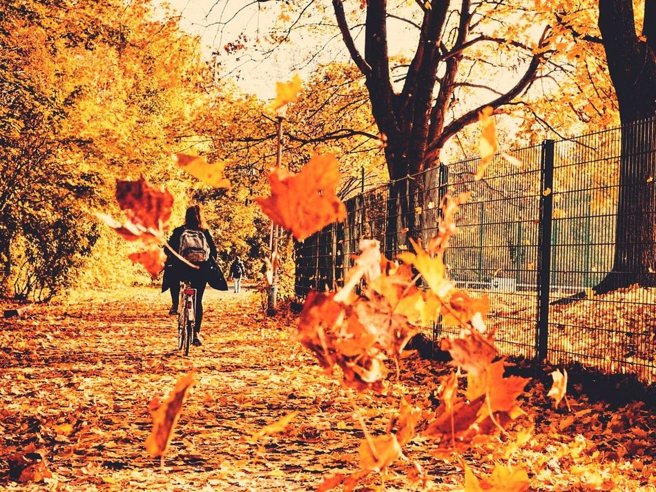 Beautiful stock photos of germany, Autumn, Beauty In Nature, Berlin, Bicycle