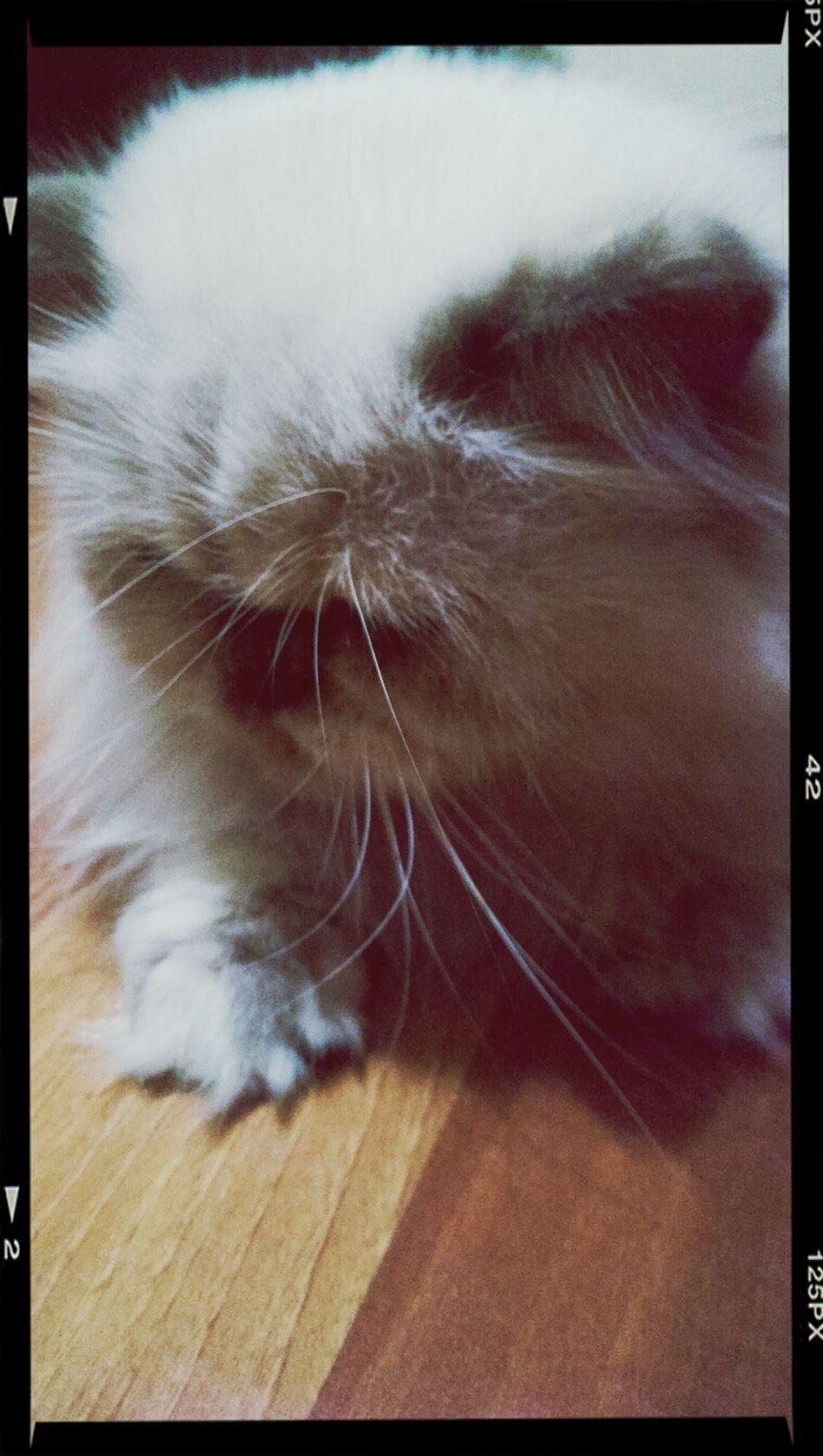 Cat Animal Girl Cute