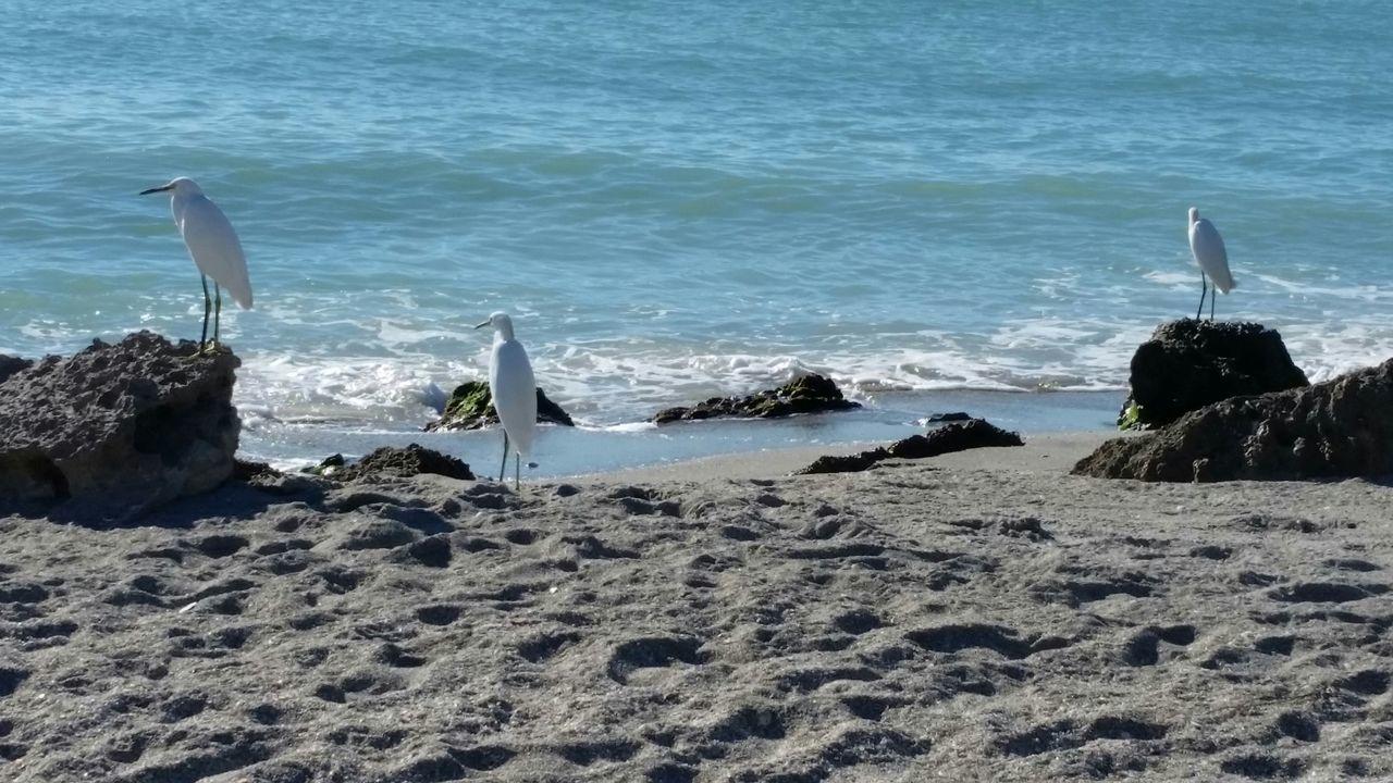 Beach Sea Sand Water Nature Shore Bird Animals In The Wild Tranquility Beauty In Nature Birds On The Beach Outdoors Nature Animal Wildlife Florida Gulf Coast No People Gulf Coast Florida Shorebird Seascapes
