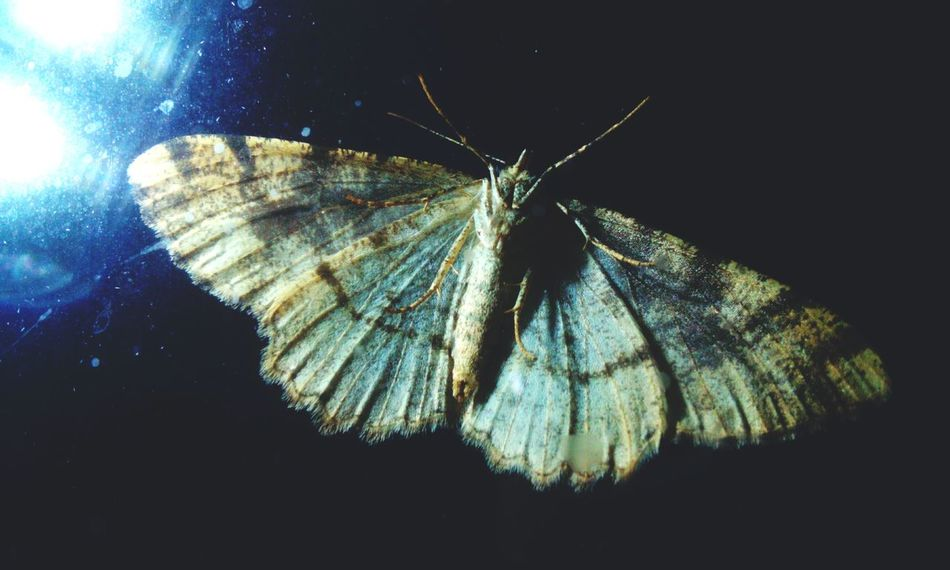 Moth Night Moth Taking Photos Dark Photography Grey Insect Photography