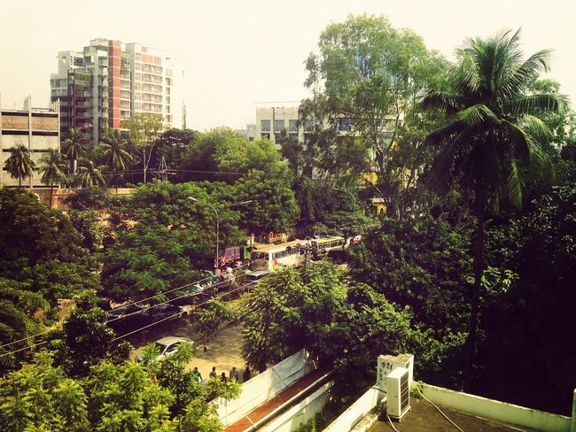 Green Trees Nature_collection Busy Inner City Cool Mood