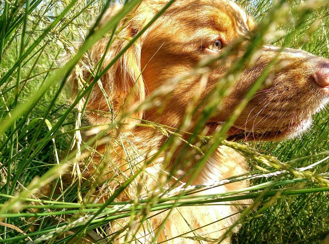 Close-up Grass Plant Growth Nature Selective Focus Green Full Frame Day Outdoors Focus On Foreground Beauty In Nature Non-urban Scene Tranquility Spiked Domestic Animals Thorn Green Color Sunlight, Shades And Shadows No Filter, No Edit, Just Photography Nova Scotia Duck Tolling Retriever