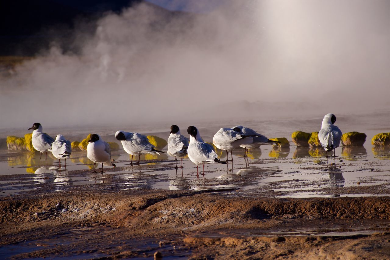 Enjoying the upcoming sun after a cold night in the atacama at around 5000m. Andes Atacama Desert Birds Chile High Attitude  Hot Springs Morning Steam Surise Water