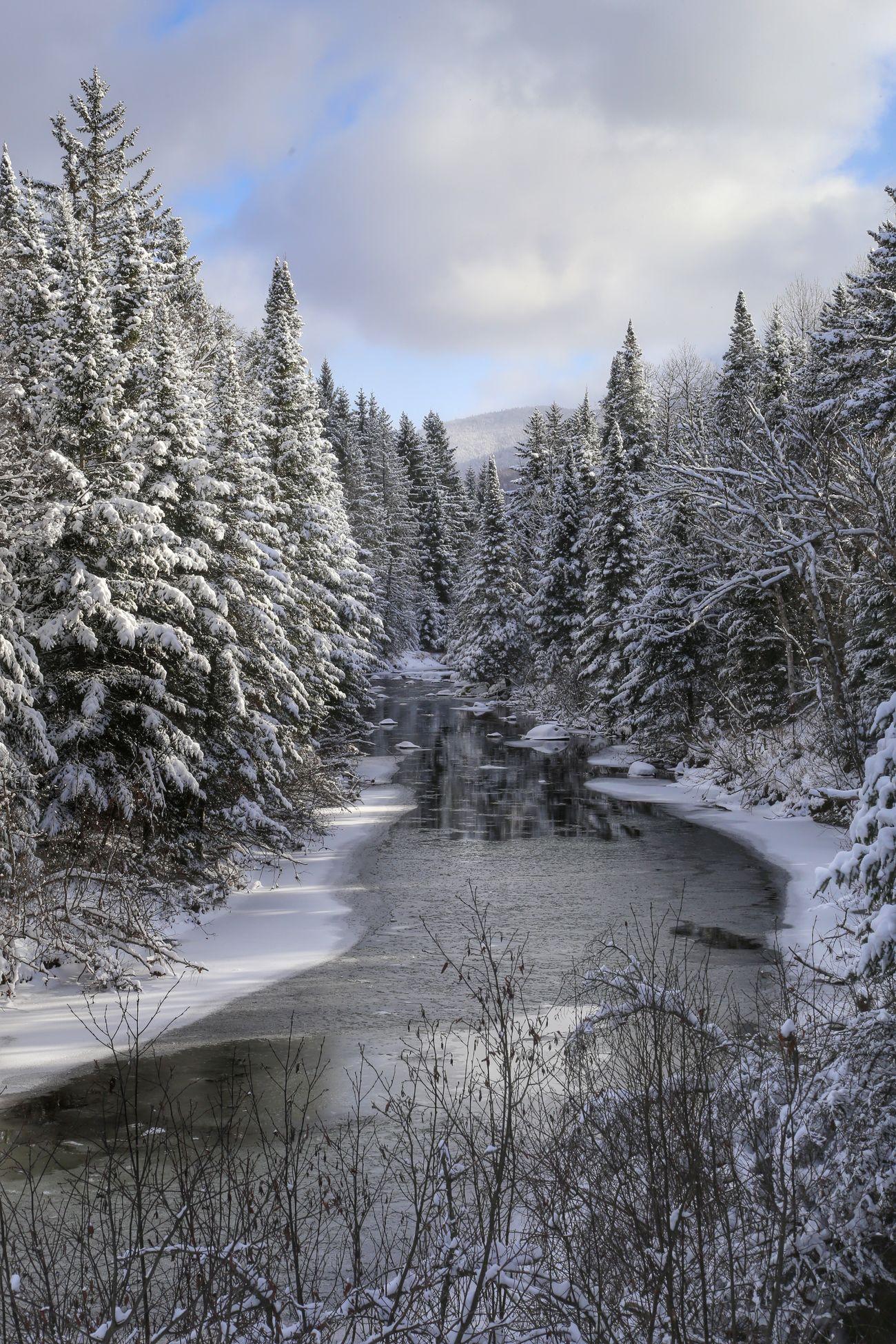 Winter Wonderland Landscape Winter Landscape_Collection