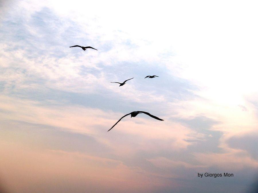 Greek Islands 4 Number 4 Birds 4 Birds Sky And Sea Moment