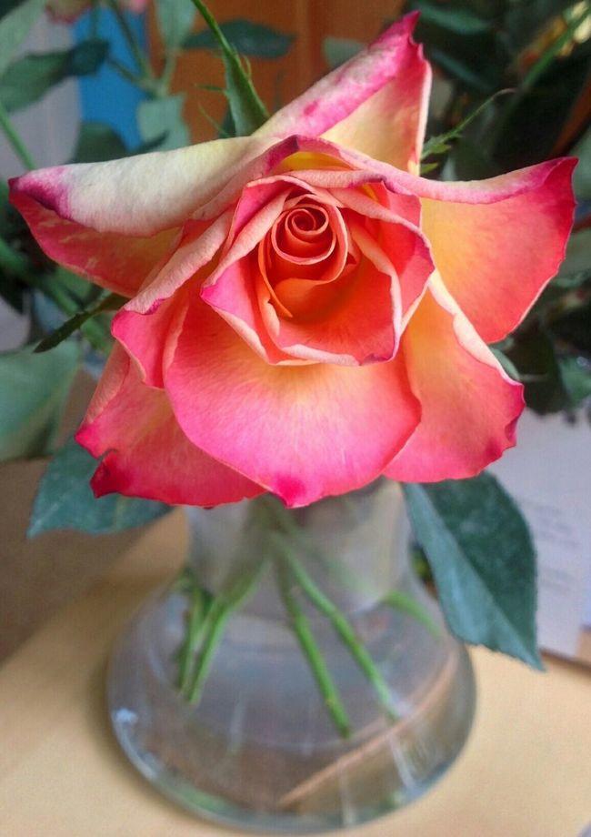 Roses Red Orange Flower Rose🌹 Favourite
