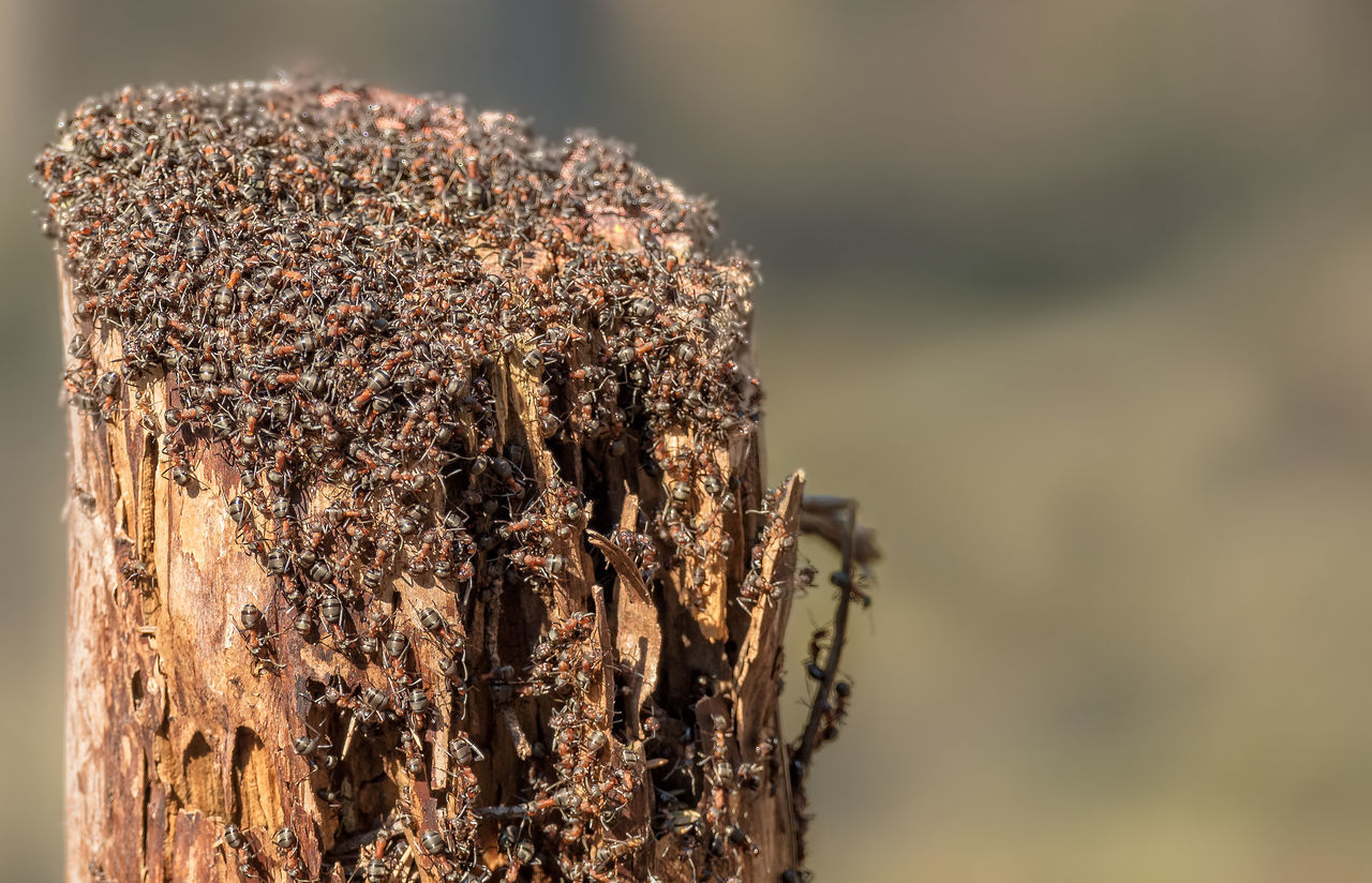 animals in the wild, insect, close-up, beehive, nature, animal themes, day, focus on foreground, honeycomb, no people, animal wildlife, outdoors, bee, large group of animals, apiculture