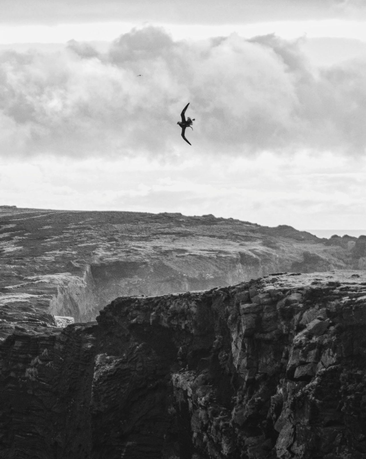 The Great Outdoors - 2017 EyeEm Awards Mid-air Sky Day Flying Nature Outdoors Sea Scenics Cloud - Sky Cliff Landscape Extreme Sports Dramatic Sky Black & White Bird Adventure in Iceland