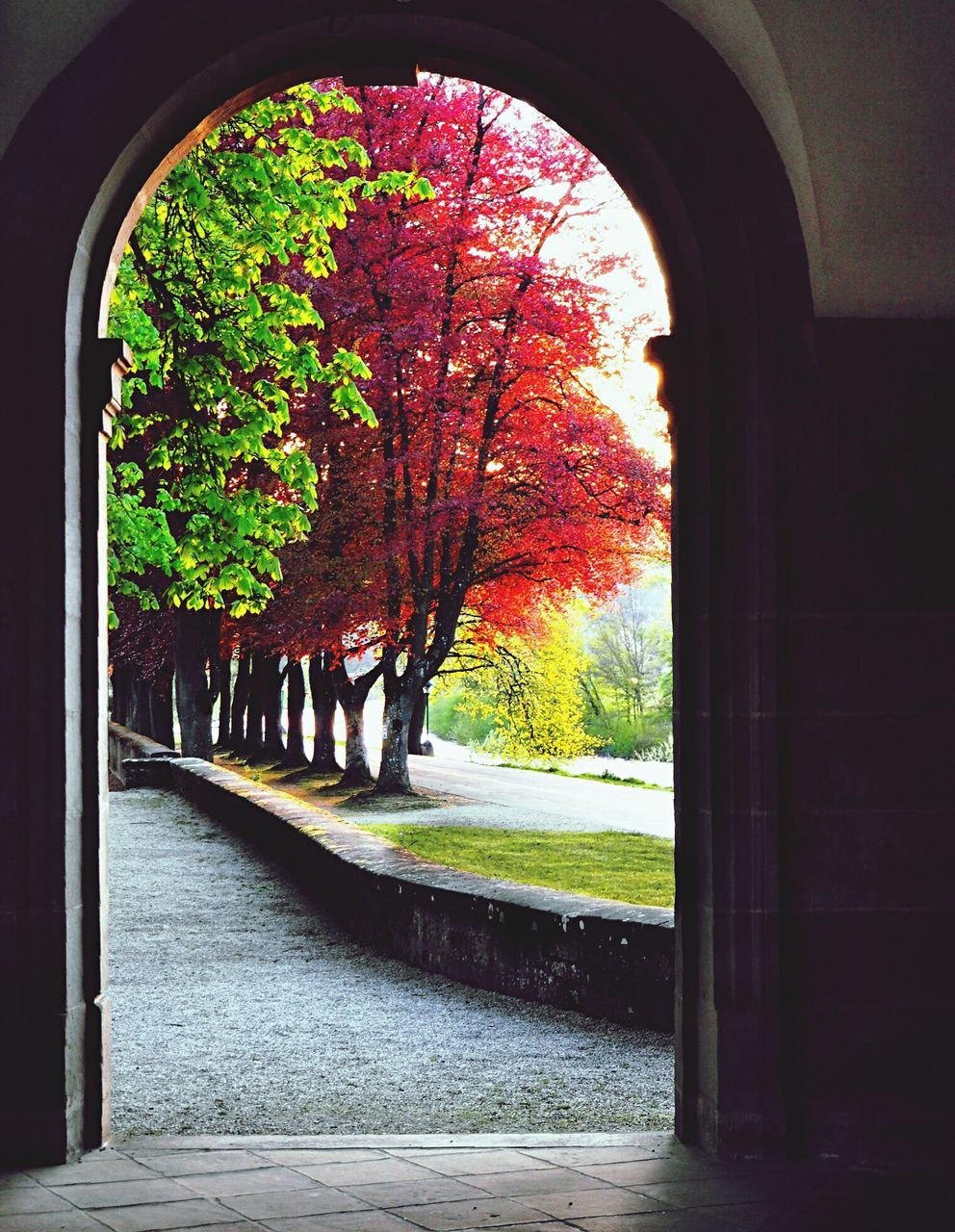 arch, autumn, growth, no people, nature, tree, architecture, day