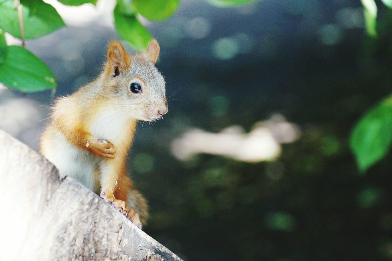 Beautiful stock photos of squirrel, Alertness, Animal Themes, Animal Wildlife, Animals In The Wild