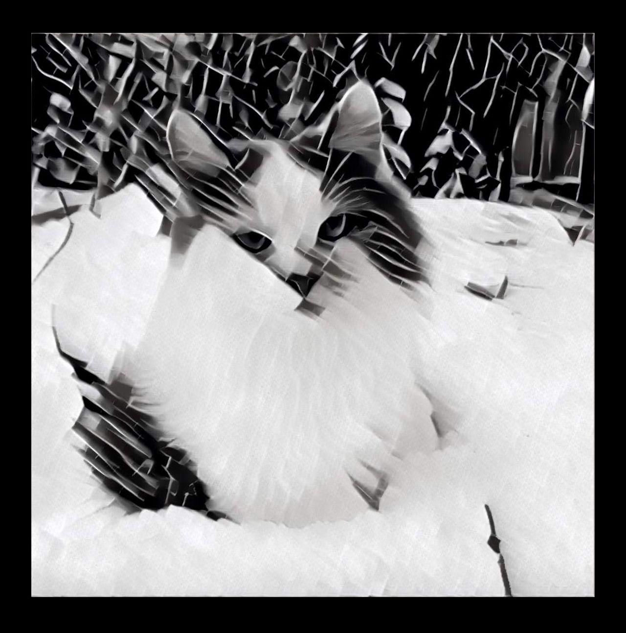 "Это не реклама ""Prisma"", просто я люблю своего котика в любых ипостасях. This is not advertising ""Prisma"", I just love your cat in any forms. Cat Cat Lovers Catlovers Cats Cats Of EyeEm Cats 🐱 Catsofinstagram Cat♡ Close-up Color Color Photography Color Portrait Colors No People One Animal Pets Pets Of Eyeem Prisma Prisma App Prisma Application Prisma Art Prisma Effect Prisma Photo Prisma_Filter Prismacolor"
