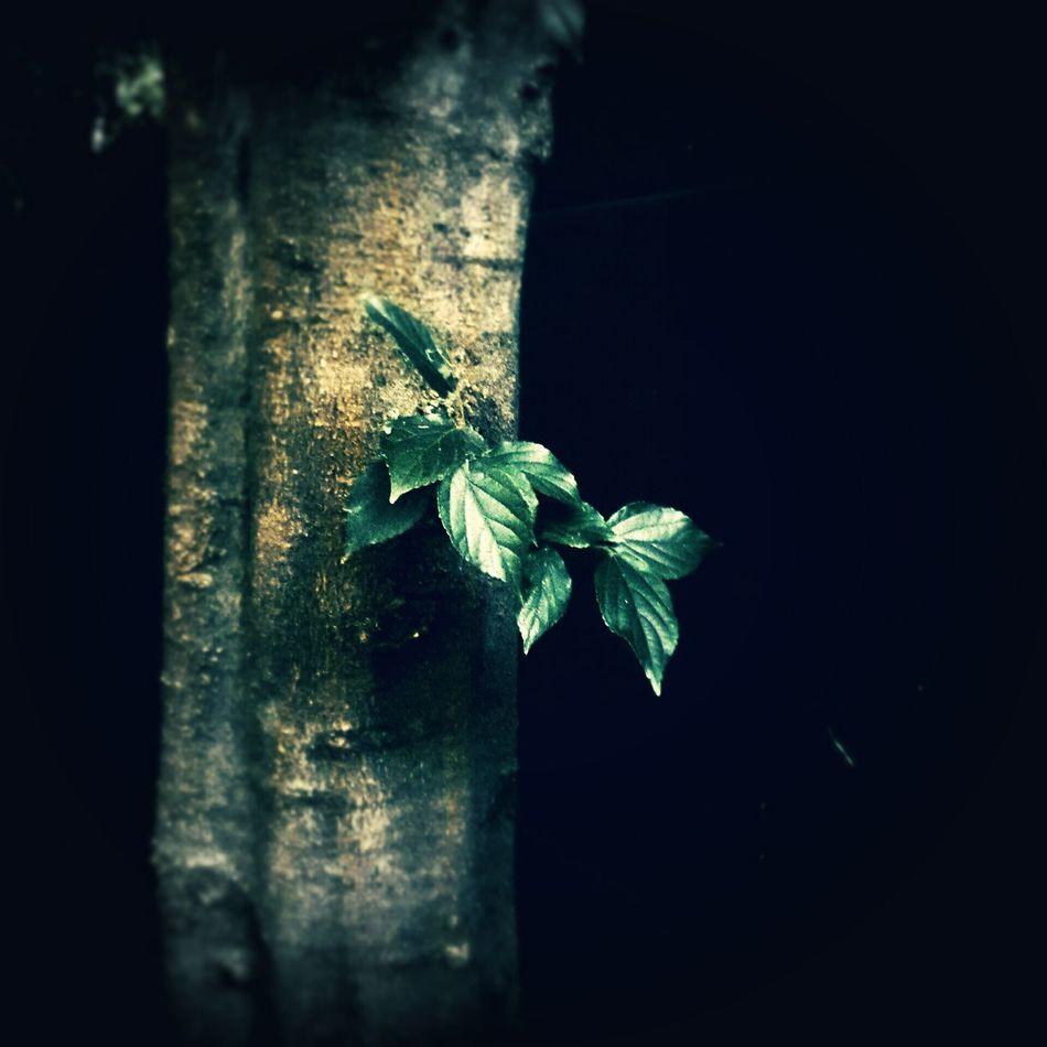 TreePorn Tree Trunk Green Shoots On The Tree. EyeEm Vision EyeEm Nature Lover Showcase: February