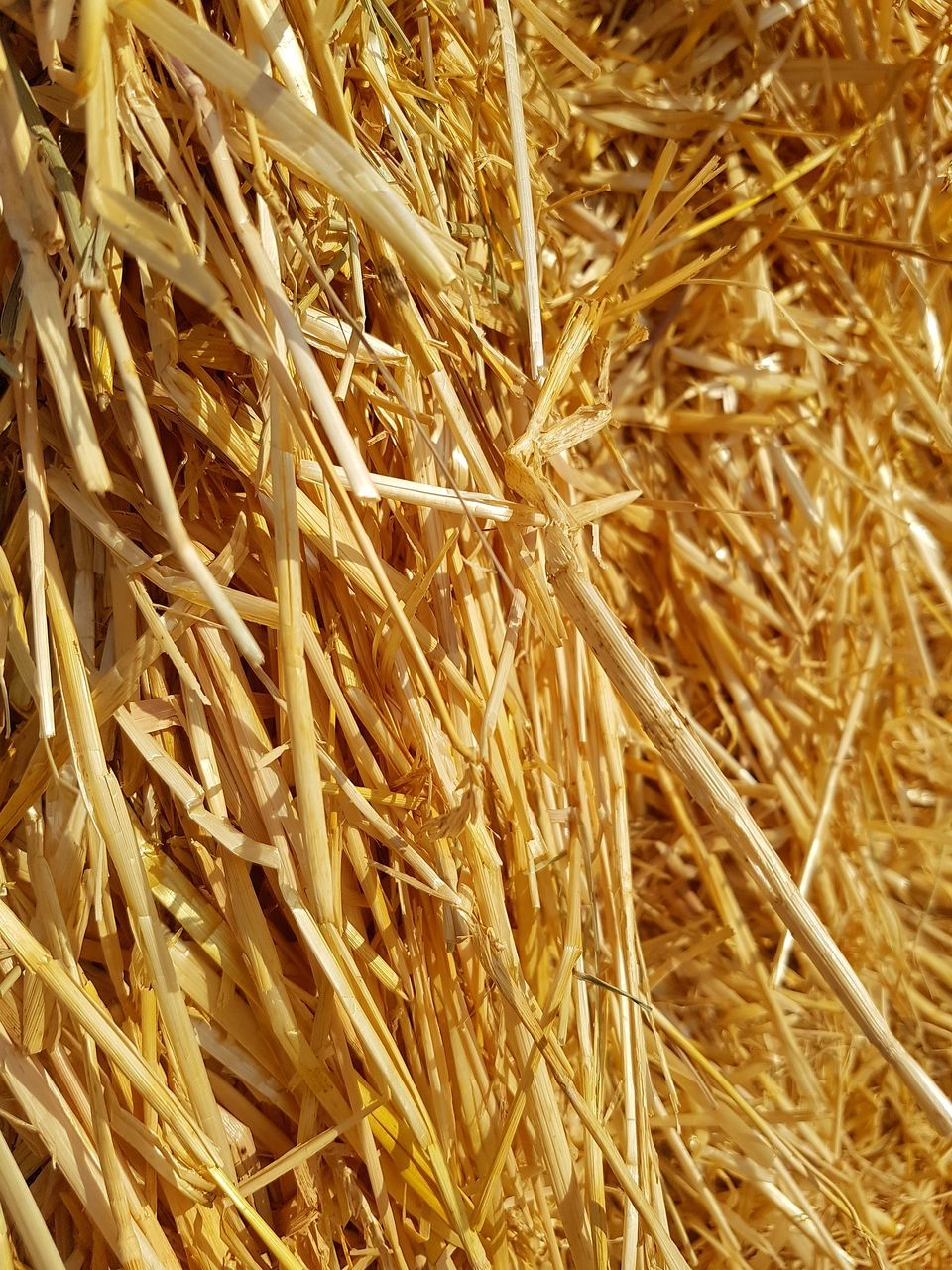 full frame, backgrounds, straw, no people, close-up, yellow, day, nature, outdoors