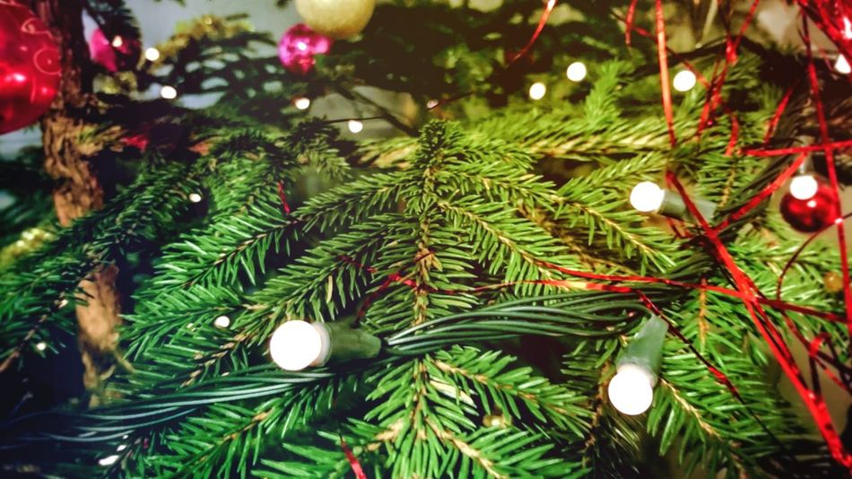 Tree Christmas Tree Christmas Decoration No People Christmas Ornament Green Color Needle - Plant Part Celebration Nature Christmas Lights New Year 2017 Angelina B Sony Xperia Photography. Happy New Year 2017 🍾🎇🎉❤ Home Sweet Home Tradition Night Illuminated Celebration NewYear Christmas Toy New Year Party New Year Celebration Christmas Tree Decoration