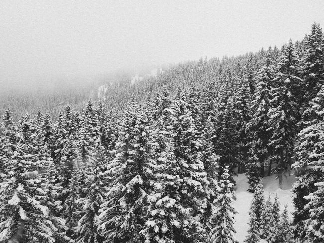 Covert with snow Nature alps Southtyrol VSCO picoftheday niceplace naturelovers vscocam Mountainlove WeLoveNature EyeEmPaid Nature Alps Southtyrol  VSCO Picoftheday Niceplace Naturelovers Vscocam Mountainlove WeLoveNature   Forest Snowfall Exploretocreate Wanderlust Throwbackthursday  Awesomeearth Modernoutdoors WeLiveToExplore