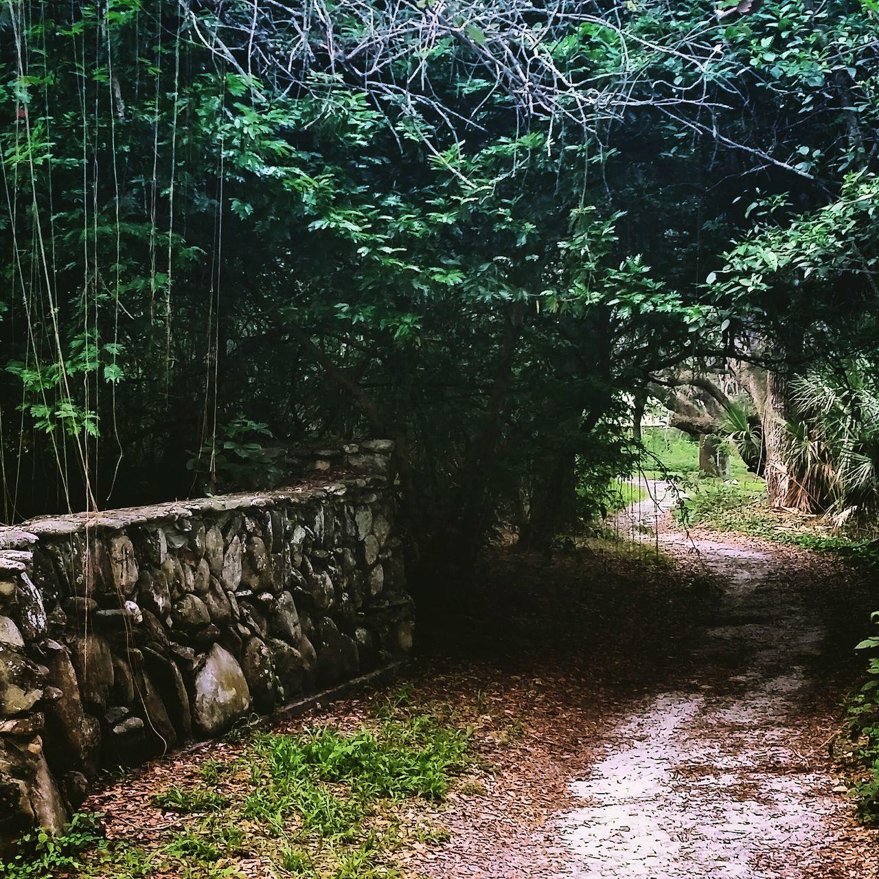 Secret Garden Stonework Secret Passage South Florida CanopyWalkway Green Leaves Florida Florida History Nature Nature Path