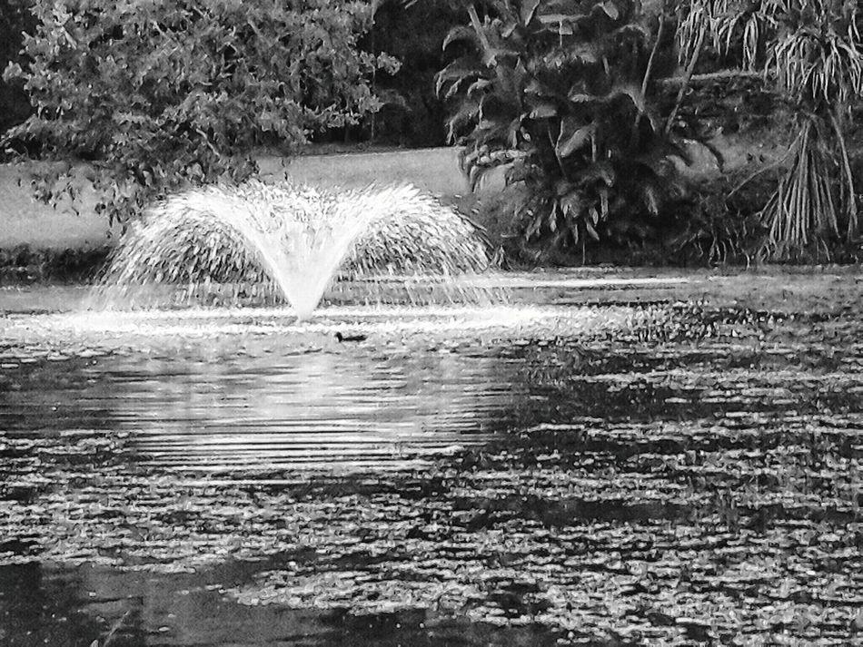 Fountain at the Botanical gardens Lone Bird