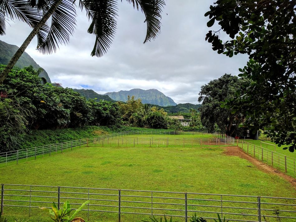 amazing view from the ranch Green Color Cloud - Sky Beauty In Nature Lush - Description Scenics Oahu, Hawaii EyeEm Gallery Landscape Scenic Photograghy Tropical Beauty EyeEm Nature Lover Outdoor Photography Grass What I Love Eyeem Photography Mountains And Sky Popular Photos Cloudporn Taking Photos No People Ranch Outdoors Tropical Paradise My Island Miles Away