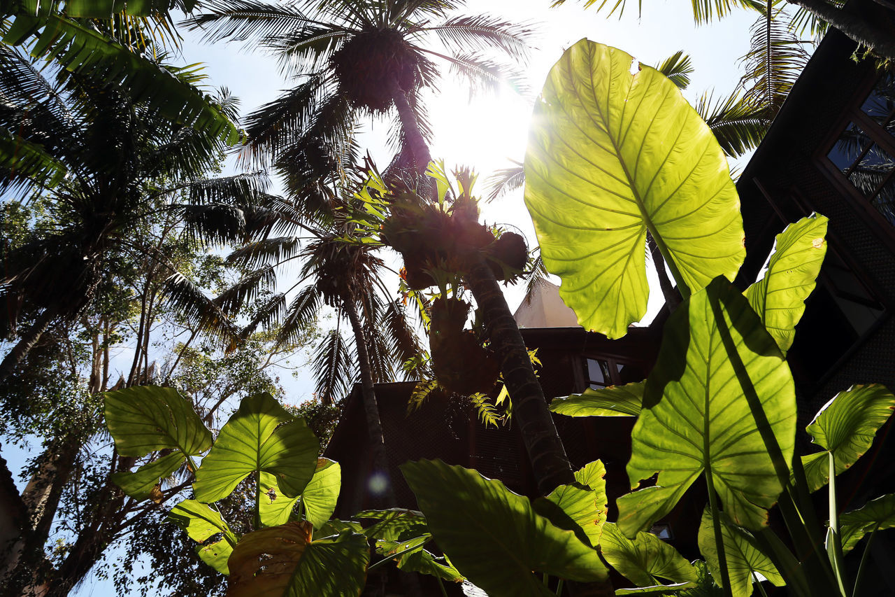 Background Beauty In Nature Branch Close-up Day Growth Leaf Low Angle View Nature No People Outdoors Palm Tree Sun Tree