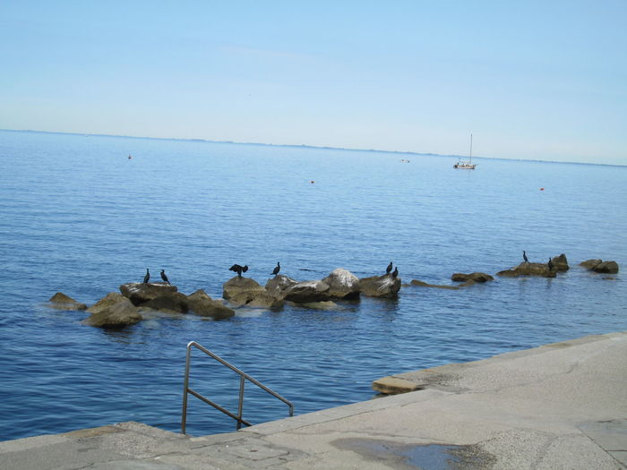 Pet Portraits Barcola Trieste Bird Horizon Over Water Italy Love Birds On A Rock Sea Sky Water