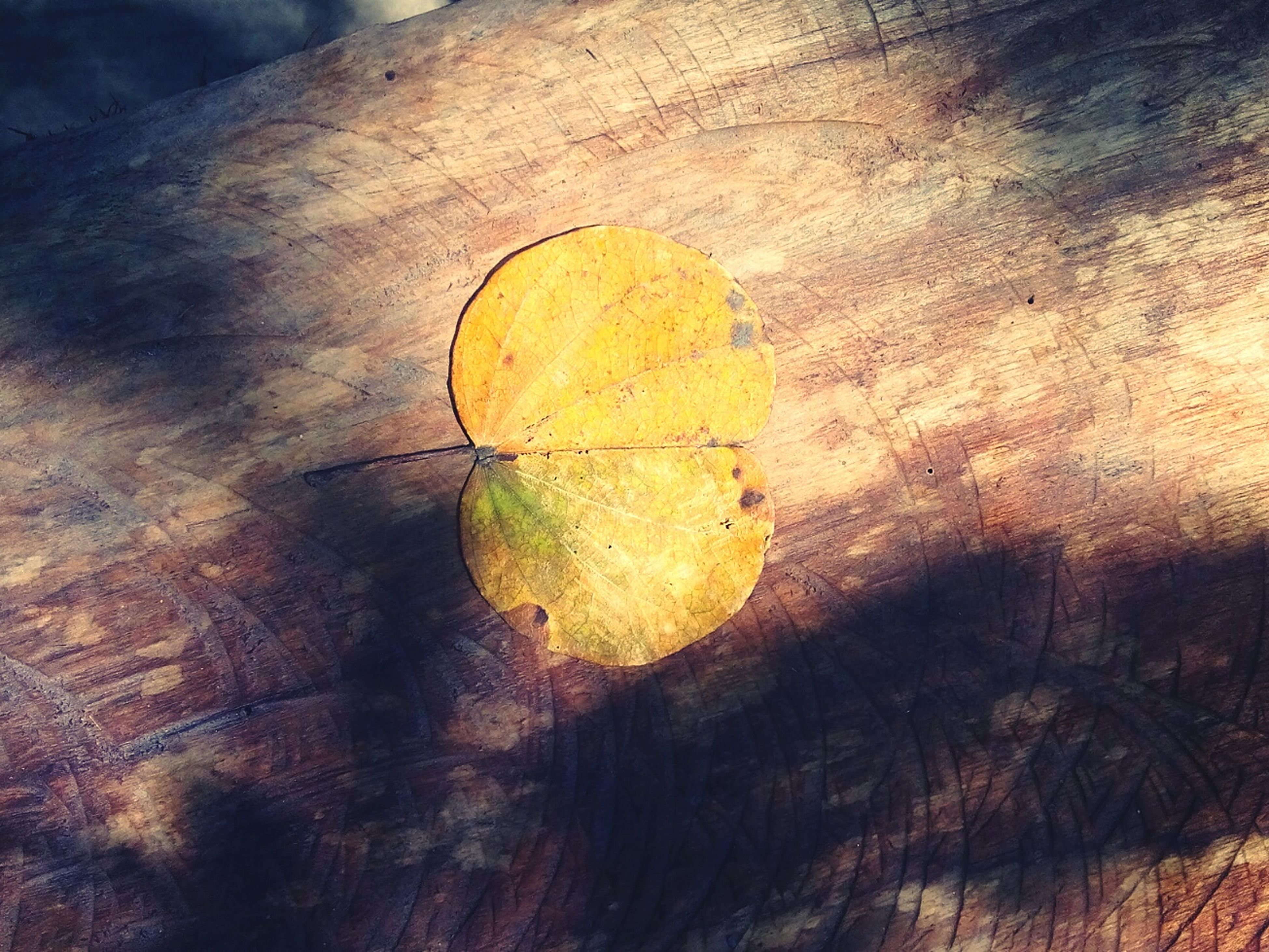 nature, close-up, growth, tree, yellow, no people, outdoors, backgrounds, tree ring, beauty in nature, day