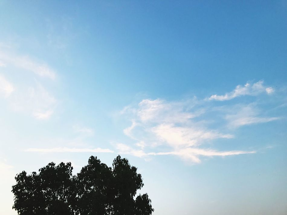 Tree Low Angle View Sky Nature Beauty In Nature Day Blue No People