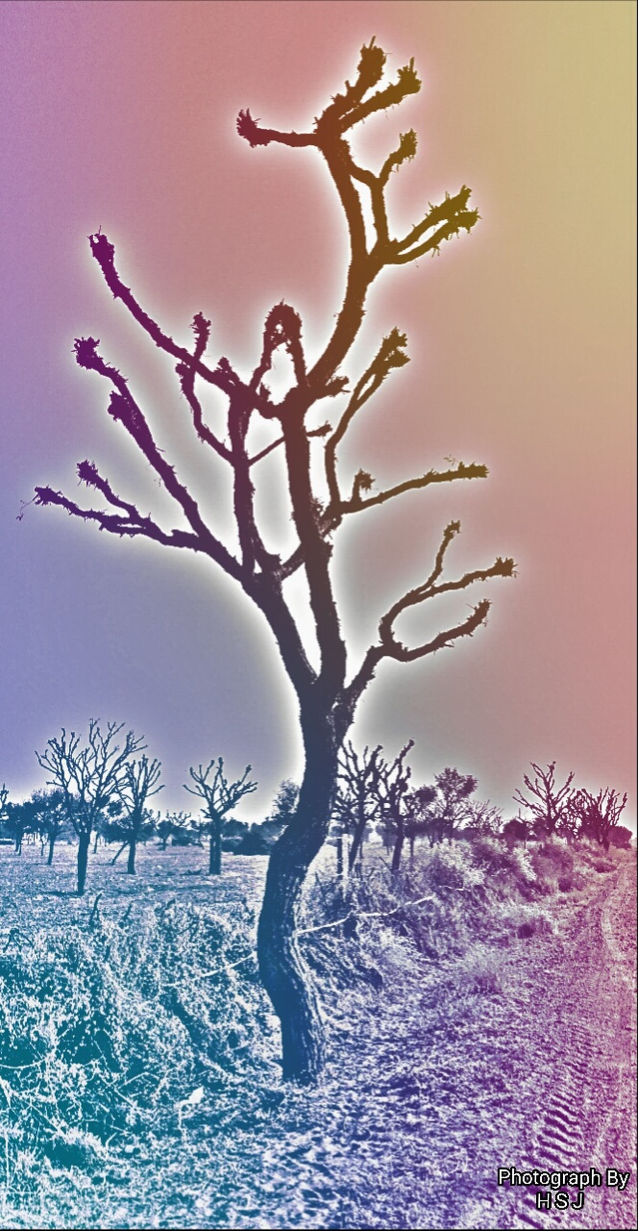Captured By Honor 4C Taking Photos Check This Out Hello World Nature Coloursplash Colours In My Mind