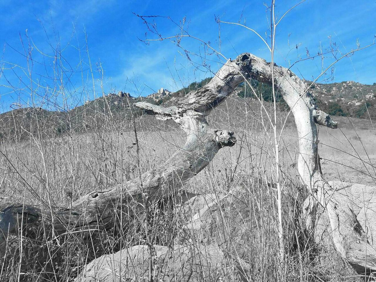 bare tree, dead plant, day, dried plant, destruction, nature, tree, branch, damaged, outdoors, dead tree, no people, landscape, mountain, beauty in nature, sky