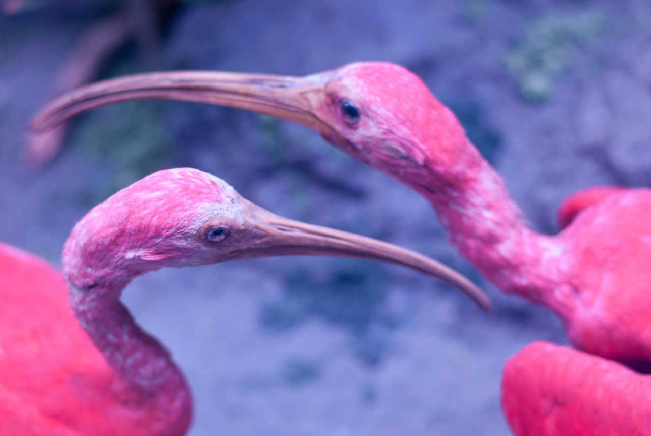 Not sure about the name, but I am very much sure they are dead and stuffed/Museum of Natural History Animal Themes Beak Bird Close-up Focus On Foreground Indoors  Millennial Pink Museum No People Pink Birds Pink Color Scenography Zoology