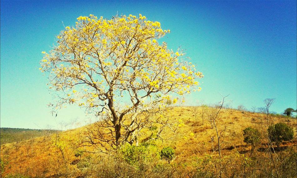 A beleza que existe tá na vida, na transformação da natureza, que me traz a noção. Relaxing Enjoying Life Hello World Natureza Nature ♡ First Eyeem Photo