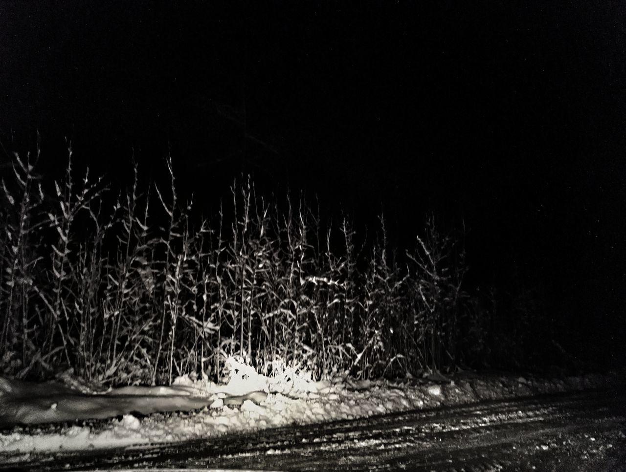 Night Tree Nature Black And White Enjoying Life Hello World Winter Cold Temperature Snow