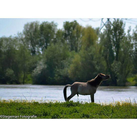 """""""Paard"""" Paardfotografie Paard Gelderland Geldersestreken horse horsephotography"""