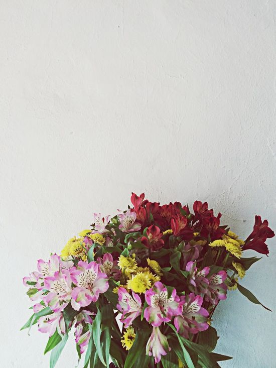 Wallflowers Wall flower