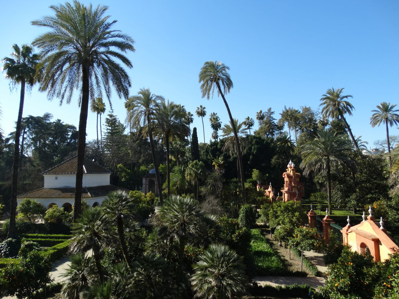 Alcazar Alcázar De Sevilla Architecture Building Exterior Built Structure Clear Sky Day Growth Nature No People Outdoors Palm Tree Sevilla Sky SPAIN Travel Destinations Tree Tropical Garden