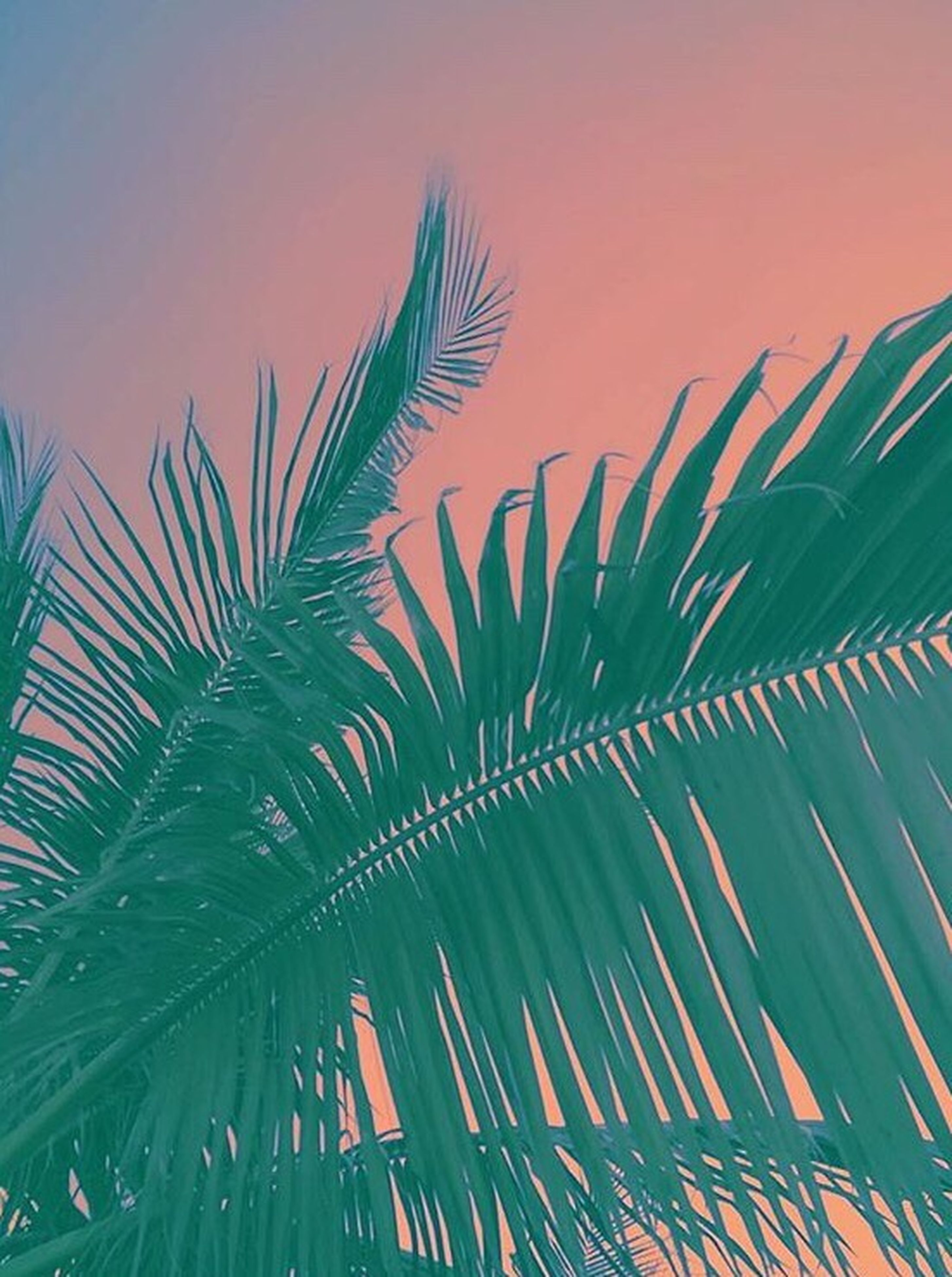 palm tree, growth, low angle view, nature, beauty in nature, sky, tranquility, green color, palm leaf, leaf, scenics, tranquil scene, plant, no people, outdoors, orange color, idyllic, multi colored, day, growing, green, cloud - sky, blue