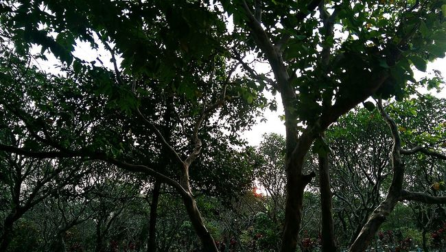 There's the sun 😁 Taking Photos Panoramic Enjoying The Sun Sunset Outdoor Photography Htcm8 Htc One M8 Bandung INDONESIA Hugging A Tree