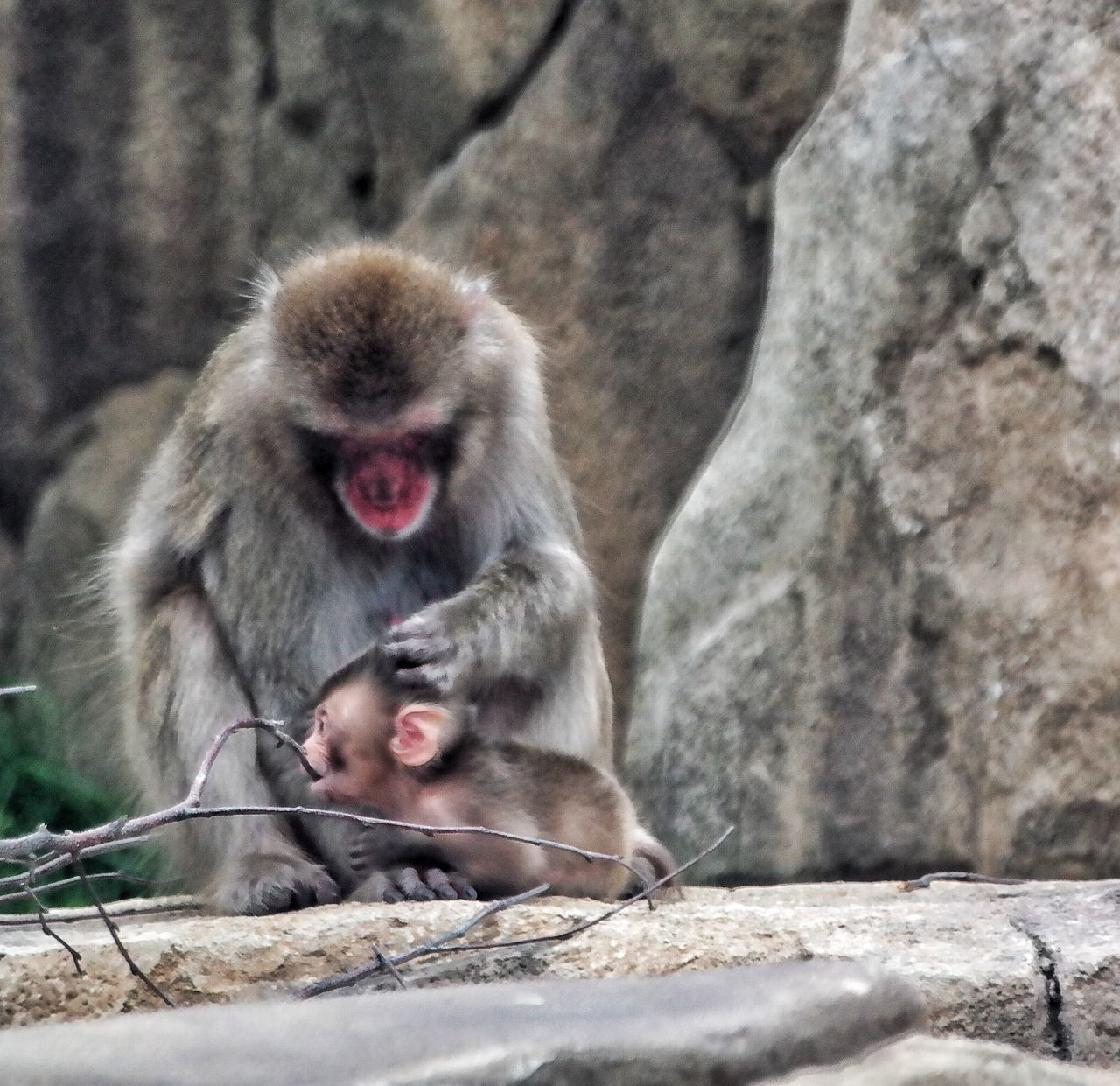 animals in the wild, monkey, animal themes, mammal, day, rock - object, one animal, animal wildlife, outdoors, no people, japanese macaque, nature, close-up