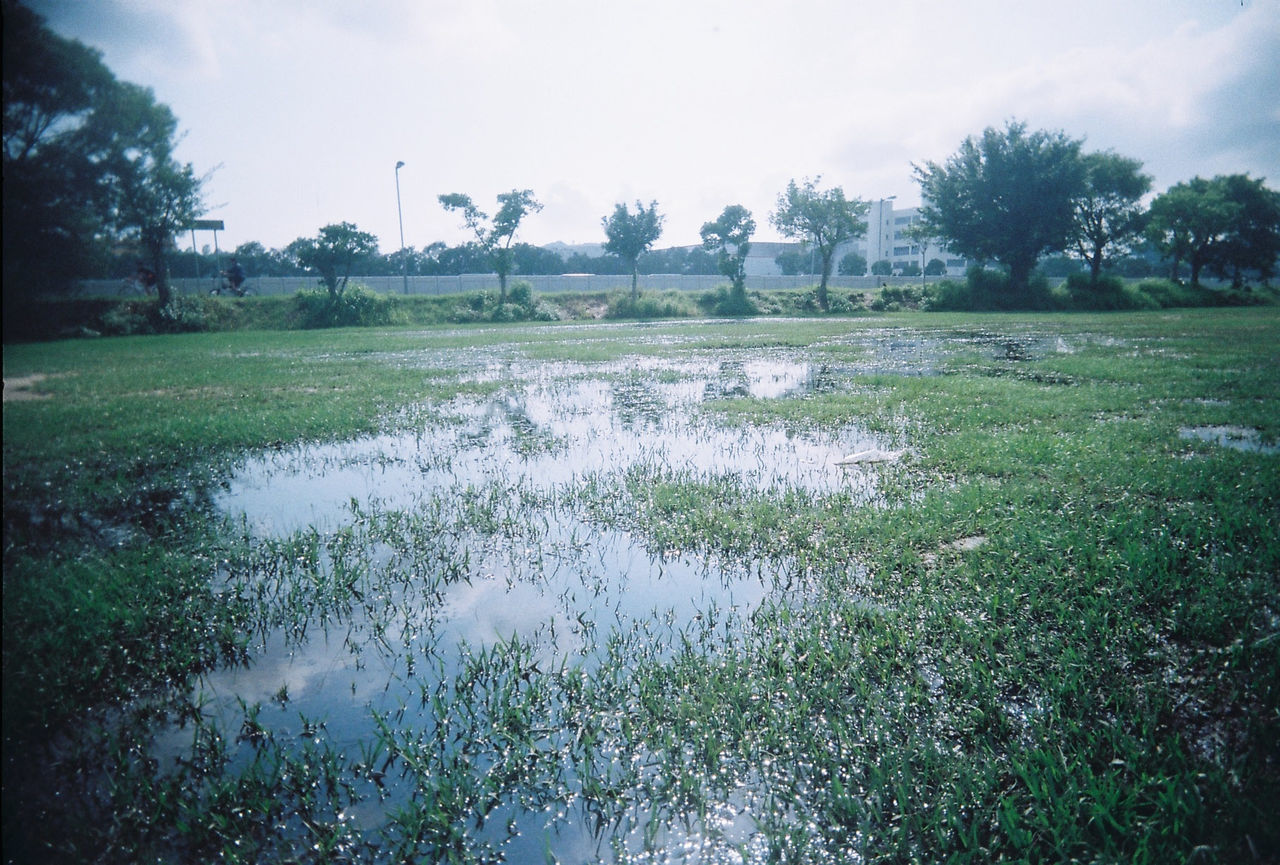 tree, field, water, nature, tranquility, landscape, tranquil scene, beauty in nature, grass, day, no people, scenics, growth, agriculture, outdoors, green color, rural scene, sky, rice paddy