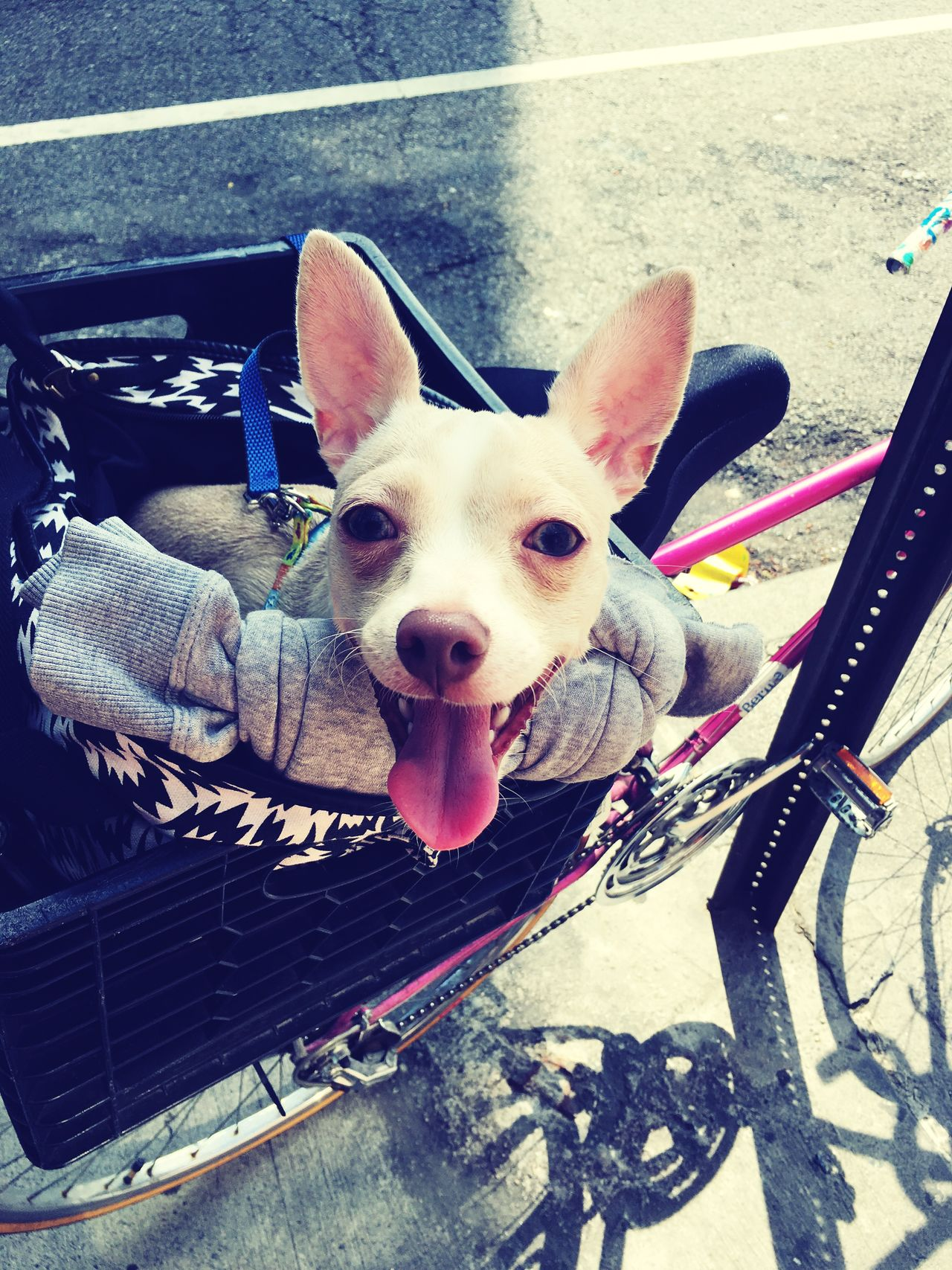 My Pet NYC Washington Heights My Pup Denim He's Ready To Ride