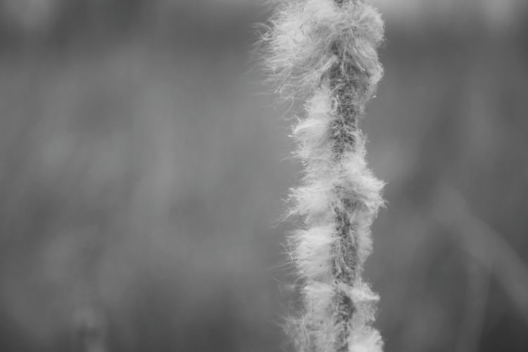 Rogoz Black And White Collection  Black And White Photography Outdoors Close Up Photography Black And White Close Up Close-up Focus On Foreground Blury Background Bokeh Bokeh Background Bokeh Photography Nature_collection Nature Photography