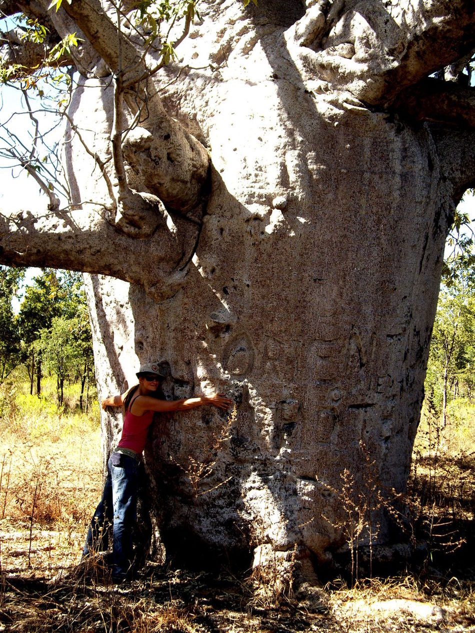 Australia Boab Tree Branch Close-up Countryside Day Growth Large National Park Nature Non-urban Scene Outback Outdoors Remote Scenics Solitude Tourism Tranquil Scene Tranquility Tree Tree Trunk