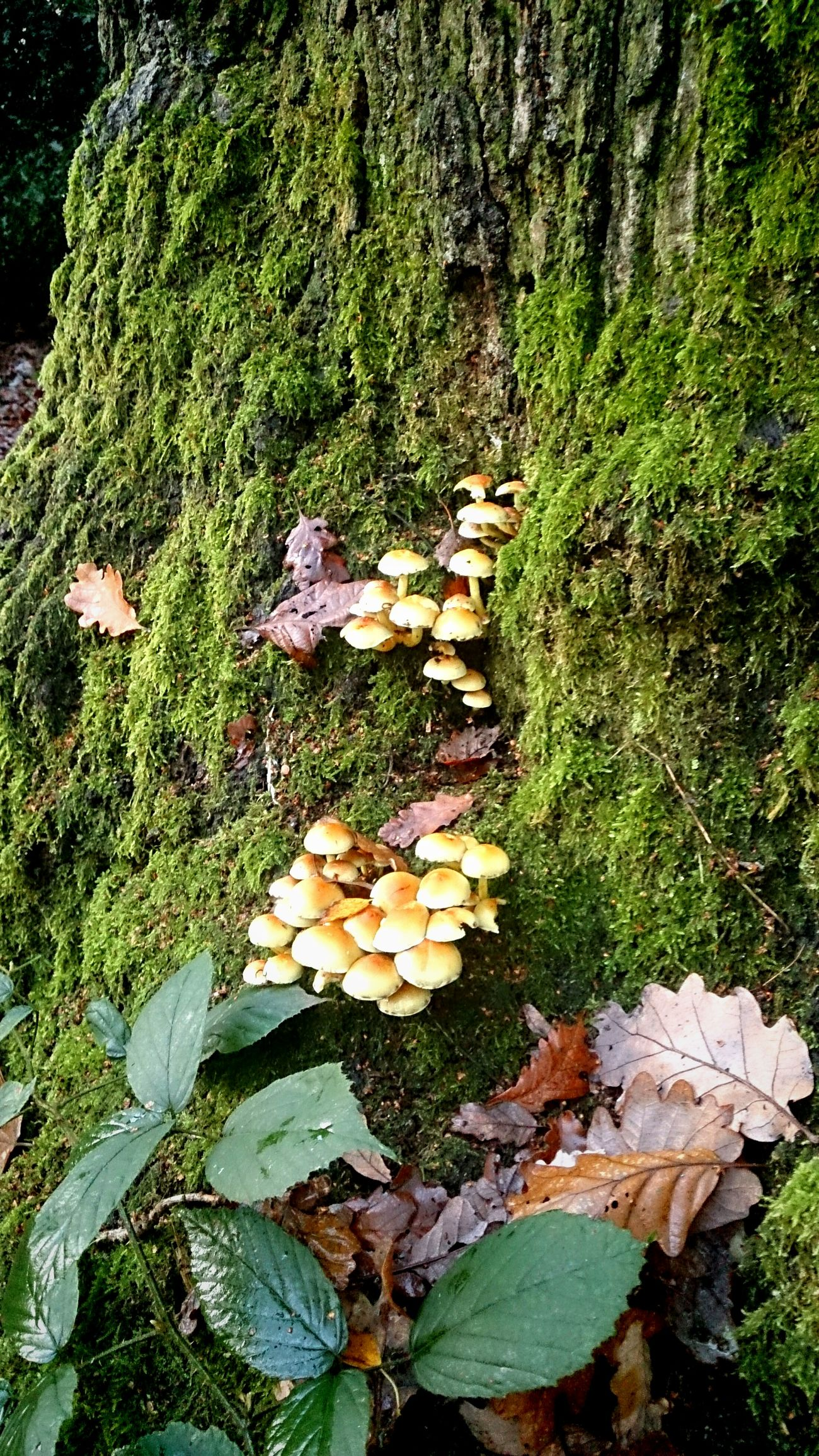 Forest Colours Wild Mushrooms