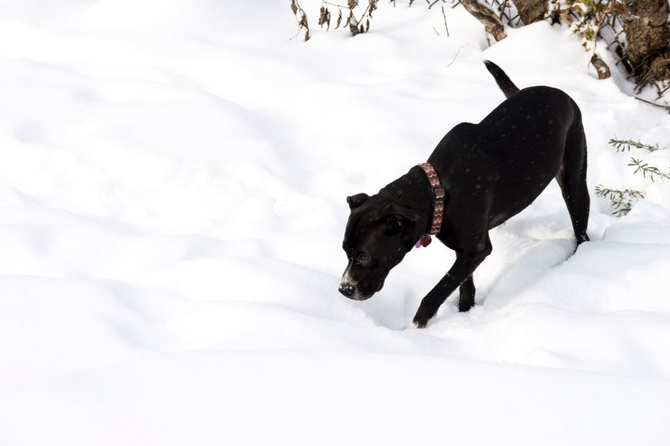 Beautiful stock photos of schneeflocken, snow, winter, cold temperature, weather