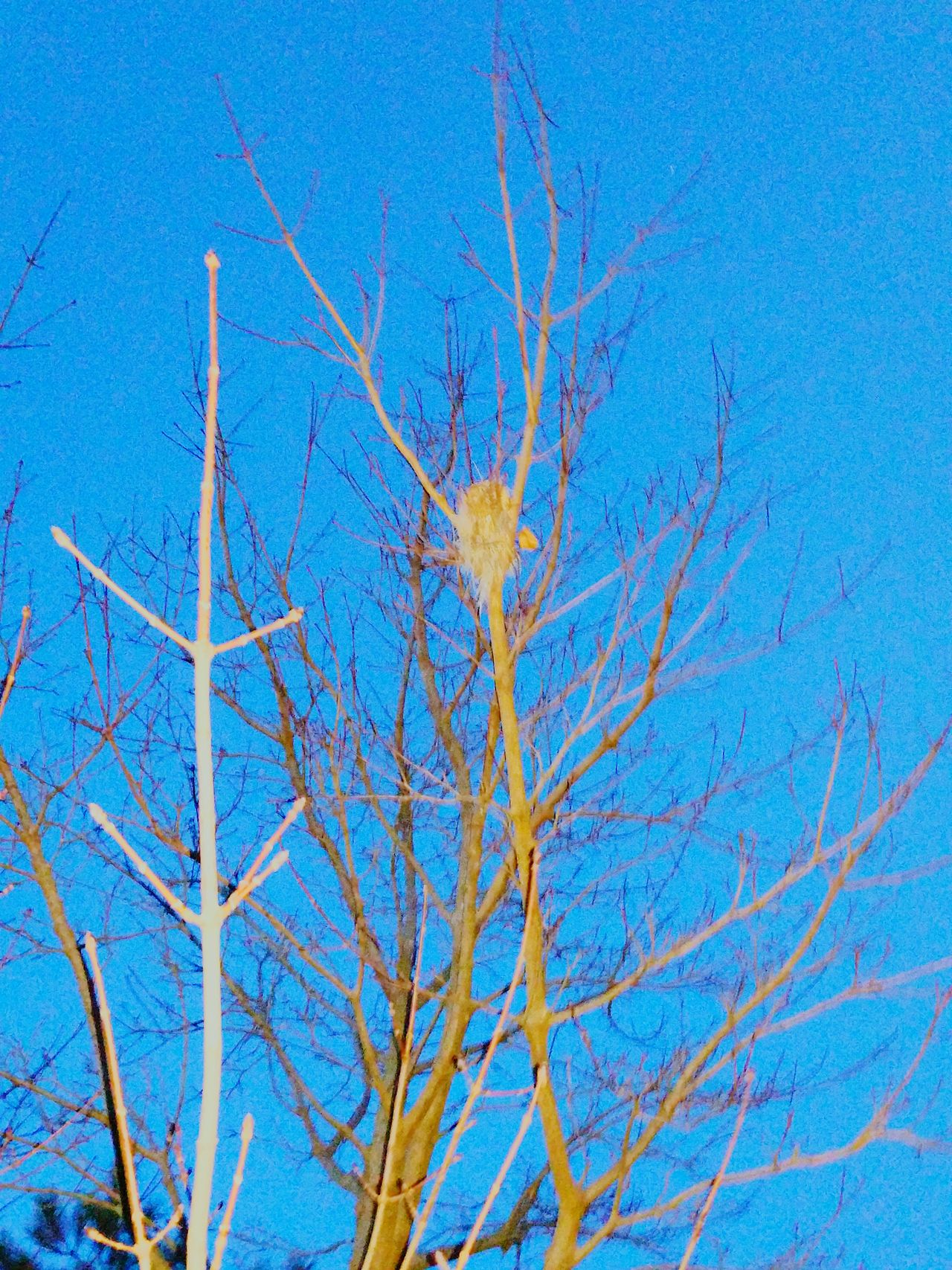 Used Flash On Bird Nest No People Clear Sky Tree Beauty In Nature Sky EvningGlow Tranquility
