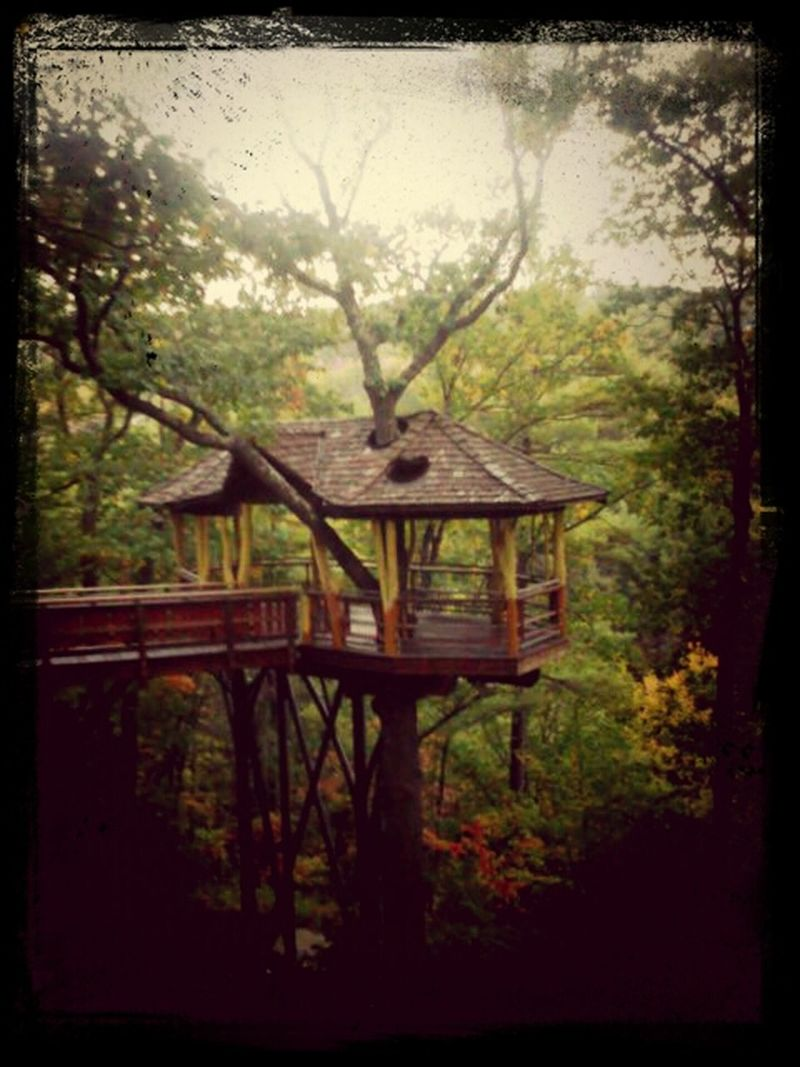 Fall treehouse Walking Around On A Hike