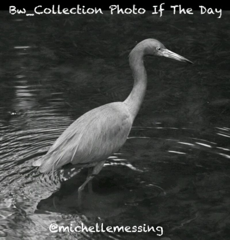 Thank you to @bw_collection for featuring my photograph! Make sure to add your black and white photographs to their bw_collection album for your chance to be featured. Award Center