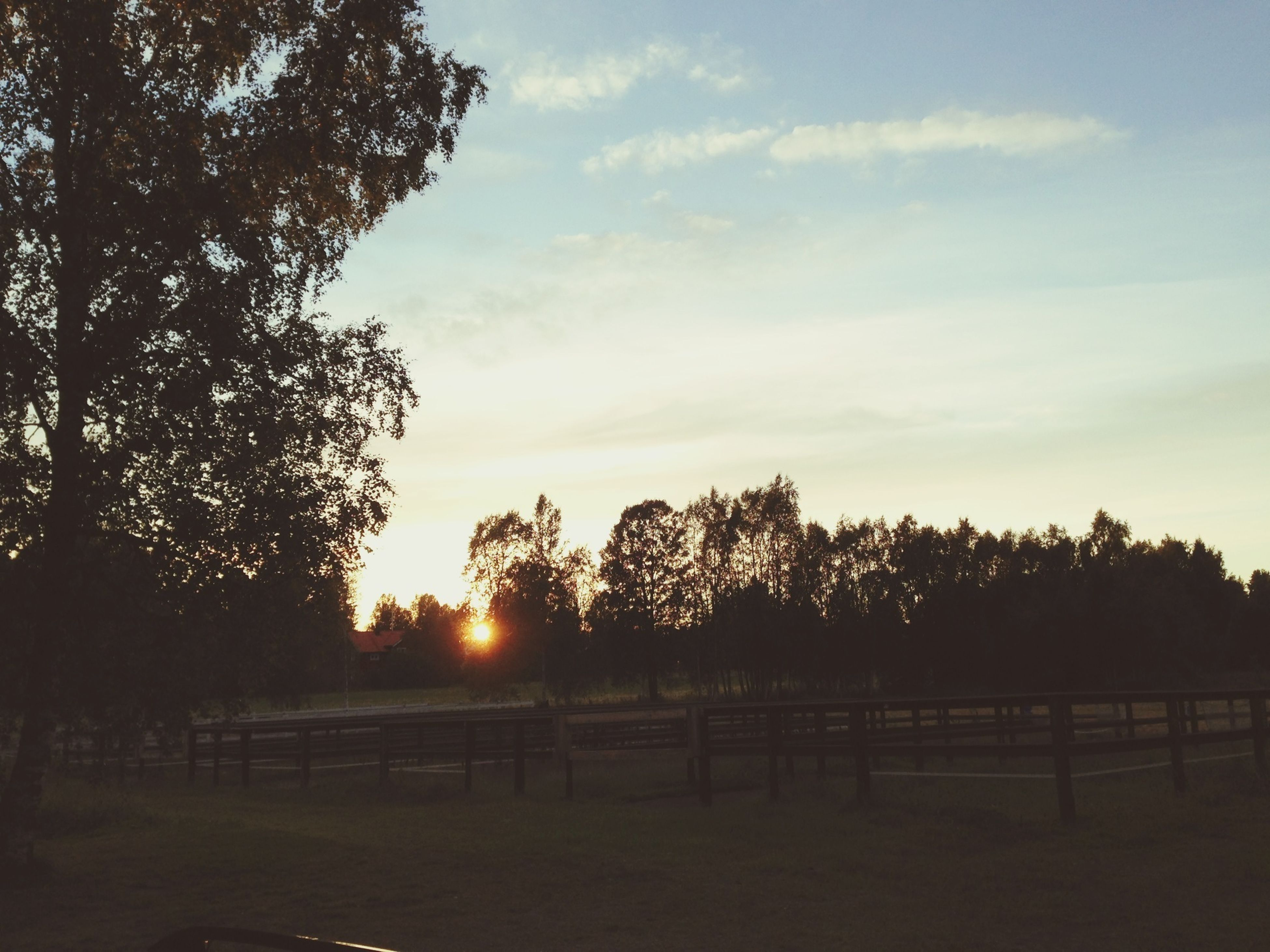 tree, tranquility, tranquil scene, sunset, landscape, sky, field, scenics, beauty in nature, nature, silhouette, sunlight, sun, growth, idyllic, cloud - sky, rural scene, fence, non-urban scene, grass
